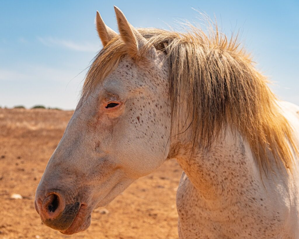 Horses and Sun Safety: Don't Let Your Horse Get Sunburned