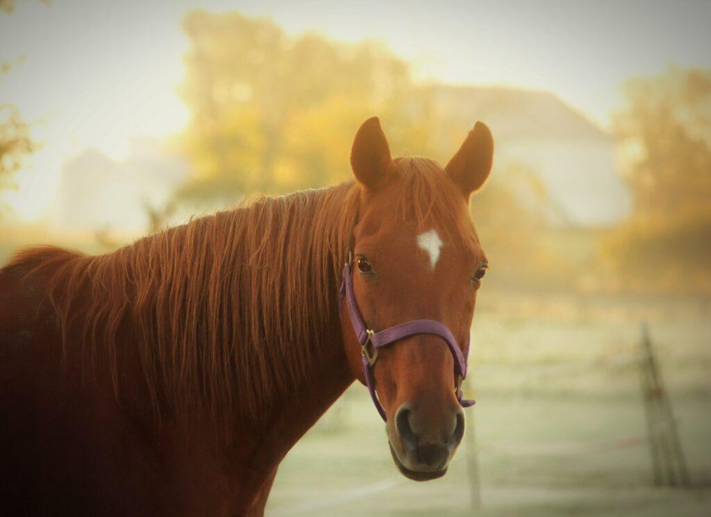 horses and sun